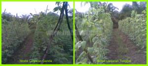Lanjaran Kacang Panjang Menggunakan Tali dan Benang