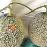 Gila, Melon Ini Harganya Sama Dengan Satu Unit Mobil Baru !