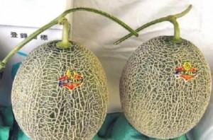 Harga melon paling mahal