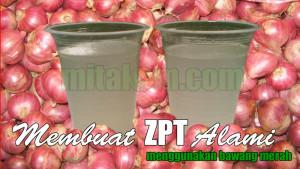 Manfaat bawang merah sebagai perangsang akar