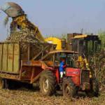 Musim Giling Telah Tiba, Petani Minta Harga Baru Patokan Gula