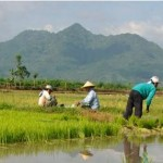 Pemerintah Rencanakan Membuka Kawasan Pangan Seluas 250.000 Ha di Merauke