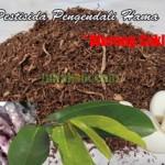 Cara Membuat Pestisida Pengendali Hama Wereng Coklat
