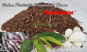 cara membuat pestisida nabati pengendali hama wereng coklat