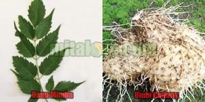 pestisida nabati untuk mengendalikan hama ulat, trips, kutu daun, tungau, nematoda dan puru akar