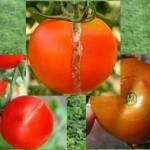 Pecah Buah Pada Tomat
