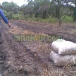 Manfaat dan Kelebihan Tricho Kompos