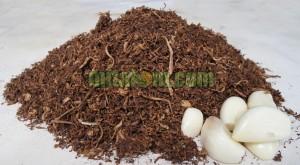 Membuat Akarisida Nabati Dengan Tembakau dan Bawang Putih