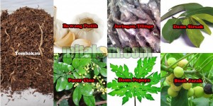 tanaman dan tumbuhan sebagai bahan membuat pestisida nabati