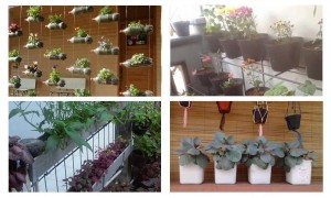 Cara Membuat Kebun Vertikultur