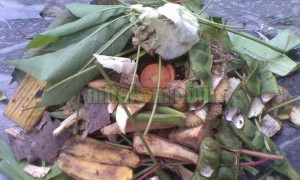 manfaat limbah sayuran