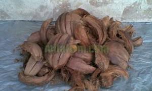 manfaat sabut kelapa