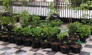 manfaat limbah dapur untuk menyuburkan tanaman