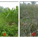 4 Cara Sederhana Mengetahui Kesuburan Tanah