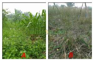 cara sederhana mengetahui kesuburan tanah