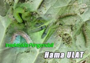 Insektisida Pengendali Hama Ulat
