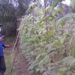 Jenis – Jenis Pestisida Berdasarkan Mekanisme Kerjanya