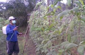 Jenis-Jenis Pestisida Berdasarkan Cara Kerjanya
