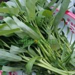 14 Manfaat Sayur Kangkung Untuk Kesehatan