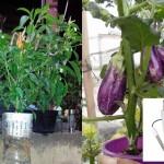 Tabel PPM dan pH Nutrisi Sayuran Buah, Tanaman Umbi dan Tanaman Buah