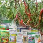 Bahan Aktif Fungisida Untuk Mengendalikan Antraknosa