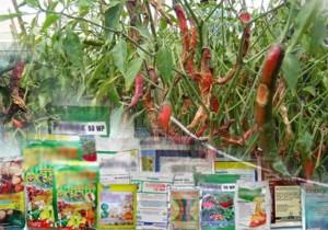 Bahan Aktif Fungisida