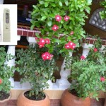 Tabel PPM dan pH Tanaman Bunga dan Tanaman Herbal