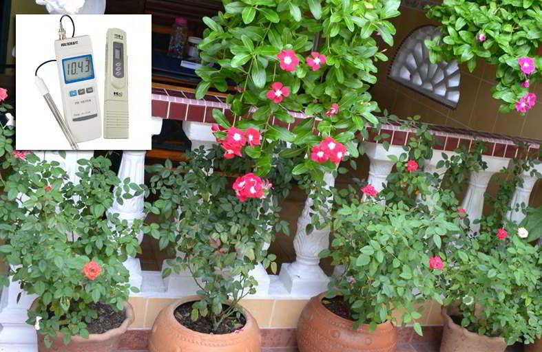 Daftar Ppm Tanaman Bunga Dan Tanaman Herbal