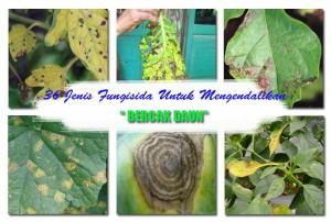 Fungisida Untuk Mengatasi Bercak Daun