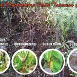 Busuk Phytophthora (Busuk batang, busuk daun, busuk kuncup dan busuk akar) Pada Tanaman Cabai