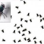 7 Cara Aman Mengusir Lalat di Rumah