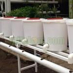Hidroponik Dutch Bucket System (Hidroponik Sistem DB)
