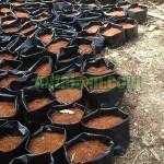 Persiapan Lahan Budidaya Cabai Hidroponik Sistem Fertigasi
