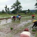 Jumlah Petani Berkurang Hingga 15.000 Orang Per Tahun, Kenapa Anak Petani Tidak Mau Jadi Petani?