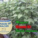 Vitamin B3, Meningkatkan Metabolisme dan Menyuburkan Tanaman