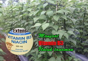 manfaat vitamin B3 bagi tanaman