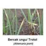 Daftar Fungisida Untuk Mengendalikan Penyakit Pada Tanaman Bawang Merah