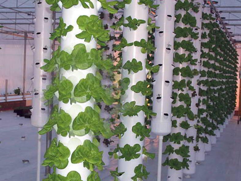 Vertical Garden, Cara Bercocok Tanam Dengan Teknik VERTICULTURE