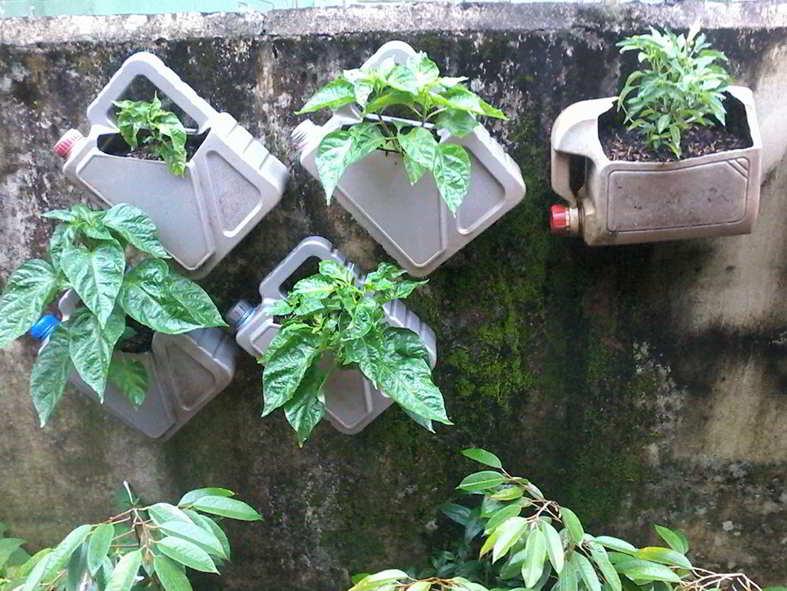 Vertical Garden Cara Bercocok Tanam Dengan Teknik