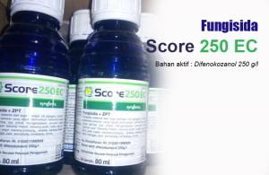 Manfaat Score 250 EC