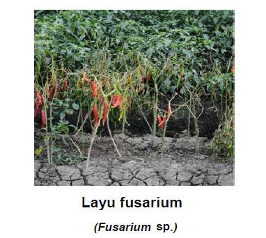 fungisida bercak daun, busuk daun, antraknosa, busuk buah ...