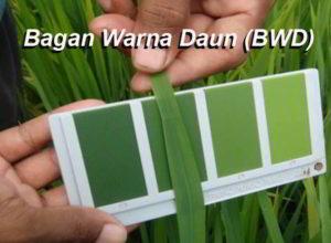 Cara Menggunakan Bagan Warna Daun (BWD)