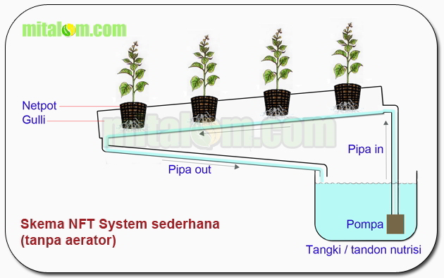 10 cara tepat dan mudah menanam tomat hidroponik subur berbuah lebat 1 cara membuat instalasi hidroponik nft system ccuart Images
