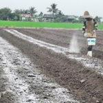 Sifat-sifat Tanah Masam, Tentang Tanah MASAM GAMBUT dan Tanah MASAM ULTISOL
