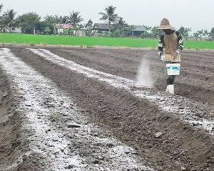 Sifat Tanah Masam Gambut dan Tanah Masam Ultisol