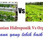 Pertanian HIDROPONIK vs ORGANIK – mana yang lebih baik ?