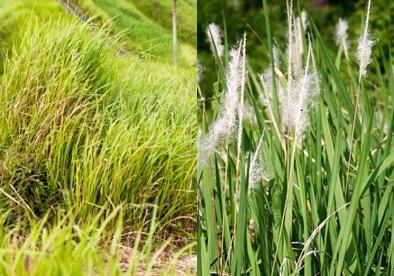 jenis jenis tanaman obat herbal kandungan manfaat serta