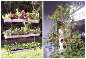 Cara Menanam Sayur Vertikultur Pipa Paralon