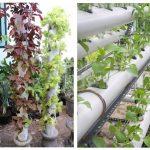 Cara Menanam Sayur di Pipa Paralon dan Talang Air