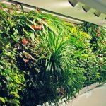 Jenis dan Contoh Tanaman Untuk TAMAN VERTIKAL (Vertikal Garden)